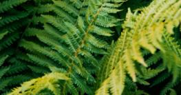 Bepflanzung unter dem Trampolin - Diese Möglichkeiten gibt es